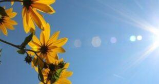 Vitamin D ključan za migrenu